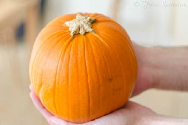 a sugar pumpkin for fresh pumpkin pie