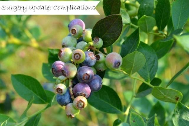 blueberriesfs-large