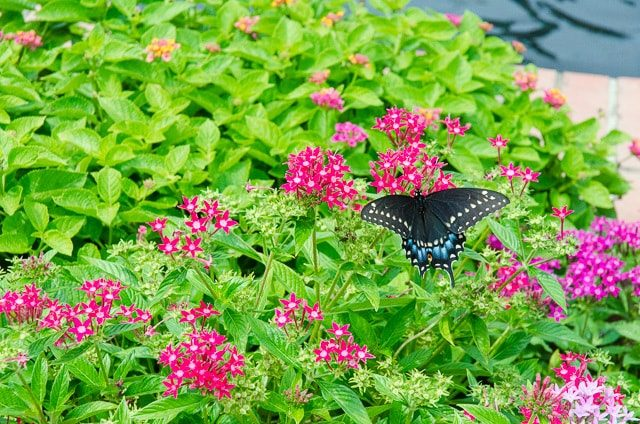 A pink flower is in a garden with butterfly