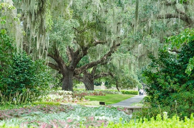 A tree at a South Carolina Plantation