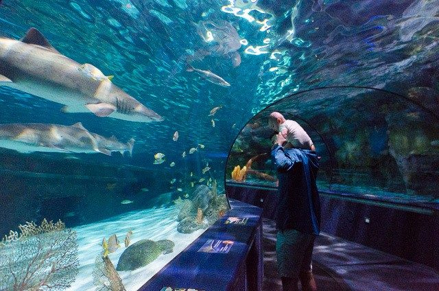 Dad and son at aquarium