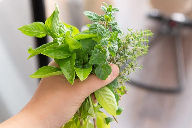 Mixed Herbs from the Garden - Basil, oregano, and Thyme