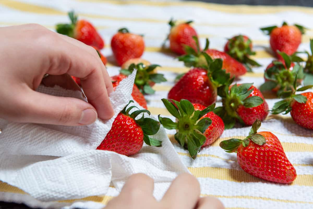 Drying Fresh Strawberries with paper Towel